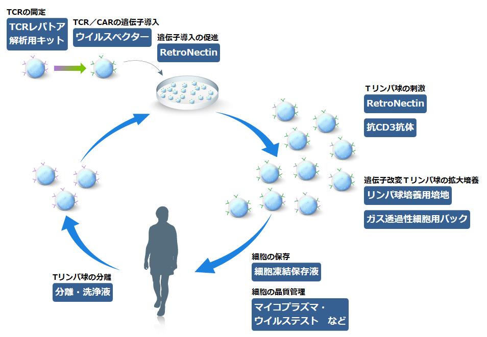 リンパ球培養関連製品 幹細胞・再生医療研究ガイド タカラバイオ株式 ...
